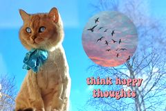 Cat On Spring Cute Funny British Cat white grey Cats Spring Cats. Love Quotes ,Think happy thoughts ,Spring Cat Sit on window top.Cat Cute Funny British white stock photos