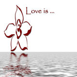 Love is reflecting. Love is with flower reflecting on water Royalty Free Stock Photo