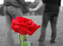 Love and romance. Long stem red rose, couple holding hands Royalty Free Stock Photography