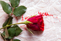 Love and rose. Composition as word love with red rose. For themes like love, valentine's day Royalty Free Stock Photo