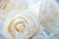 Love is ( rose paper ) Stock Images