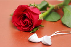 Love, rose, romantic music concept Royalty Free Stock Image