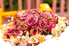 Love roses wilt, dry Royalty Free Stock Photography