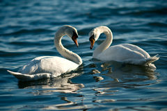 Love's everywhere Royalty Free Stock Photography