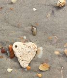 Love in the sand. Heart shaped shell shaped by the waves of time on the natural beaches of Amelia Island Royalty Free Stock Photography