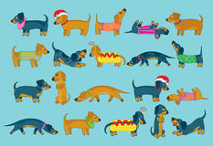 For the love of sausage dogs! Stock Photography