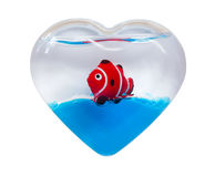 Love of the sea. Red striped small fish in an aquarium in the form of heart symbolising love to the sea, isolated on white with clipping path Royalty Free Stock Photo