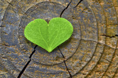 Love shape green leaf Royalty Free Stock Photography