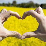 Love shape hands - heart on yellow field and blue sky Stock Photo