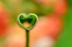 Love shape lotus leaf stock photos