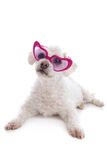 Love Sick Puppy looking through rose coloured glasses Stock Photos