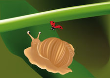 About love of a snail Royalty Free Stock Photo