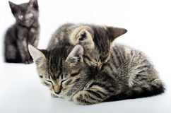 Love and solitude concept with cats Royalty Free Stock Images