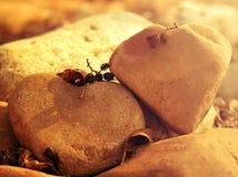 Love stones. Beautiful heart love stones. Valentine Stock Image