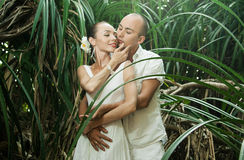 Love story in jungle Royalty Free Stock Image