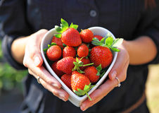 Love strawberry Royalty Free Stock Photos