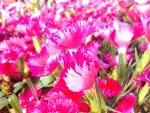 Love surrounding. Flowers bloom beautiful colors sweet Royalty Free Stock Images