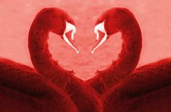 Love swans Royalty Free Stock Photos