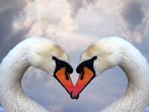 Love and swans stock photography