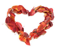 Love symbol. From red autumn leaves stock image