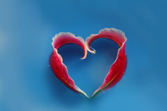 Love symbol. From lily petals Stock Photos