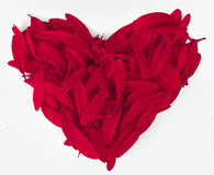Love symbol. From red petals stock images