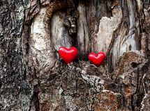 Love symbol red heart on bark Royalty Free Stock Photos