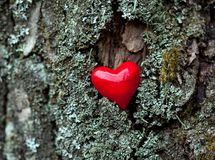 Love symbol red heart on bark Royalty Free Stock Photography