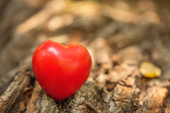 Love symbol on the tree trunk Stock Photo