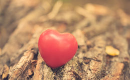 Love symbol on the tree trunk Stock Photos