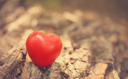 Love symbol on the tree trunk Royalty Free Stock Photography