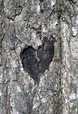 Love symbol on a trunk of tree Royalty Free Stock Photography