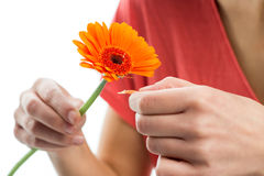Love test royalty free stock photography
