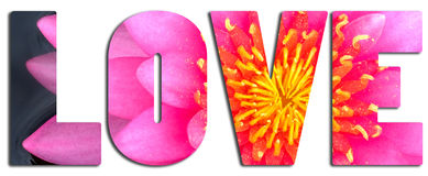 Love text filled with pink waterlily Royalty Free Stock Photos