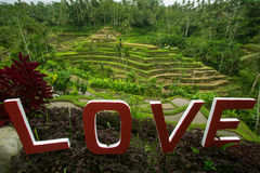 Love text written on the green rice terraces. Bali. royalty free stock photo