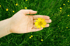 Love to the nature. A young woman is holding a flower in her hand Stock Photo