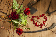 Love and tools. Composition from roses, thorned branches, rose petals and carpenter tools royalty free stock images