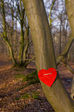 Love tree. Tree with a red  love heart arround trunk Stock Image