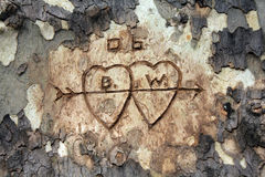 Love Tree Carving