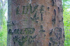 Love on the tree Royalty Free Stock Photo