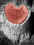 Love tree. With red heart Royalty Free Stock Image
