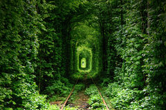 LOVE TUNNEL. This is just a miracle, because that tunnel made by nature. That railroad is desolated, so tree is concrescented like train wagon form royalty free stock images