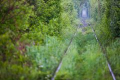 Love tunnel in Romania Royalty Free Stock Photo