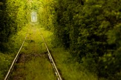 Love tunnel in Romania. View of a railroad track in the woods that form a tunnel around it, tourist attraction near Caransebes, Romania, also known as the love Royalty Free Stock Image
