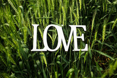 Love word in wheat Royalty Free Stock Photos