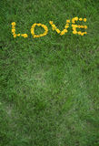 Love written in dandelion flowers Royalty Free Stock Image