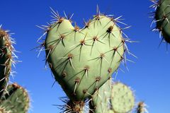 USA, Arizona: Prickly pear cactus - >Love you! Royalty Free Stock Image