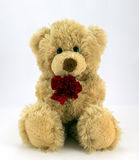 Love you.... Cute fluffy teddy holding a red carnation Stock Photo