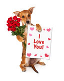 Love You Puppy With Roses Royalty Free Stock Photos