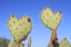 Prickly Pear Cactus >Love you, too! Stock Images